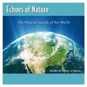 Echoes Of Nature - Tropical Rainforests