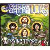 The Sheepdogs - You Never Listen Grafik