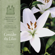Consider the Lilies - Mormon Tabernacle Choir, Craig Jessop & Orchestra At Temple Square