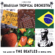 Brasilian Tropical Orchestra - The Music of The Beatles in Boss Nova