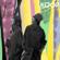 Koop Island Blues - Koop