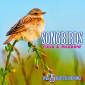 Songbirds: Field & Meadow (Over 25 Beautiful Bird Songs & Sounds)