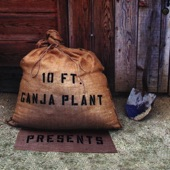 10 Ft. Ganja Plant - Chalwa (from Presents)