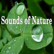 Pure Nature - Bubbling Brooks, Oceans, Rain, Rivers, and Waterfalls - Sounds of Nature - Sounds of Nature