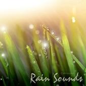 Calmsound - Thunder and Rain