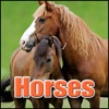 Horses Sound Effects
