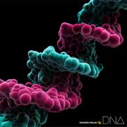 DNA - MONKEY MAJIK - MONKEY MAJIK