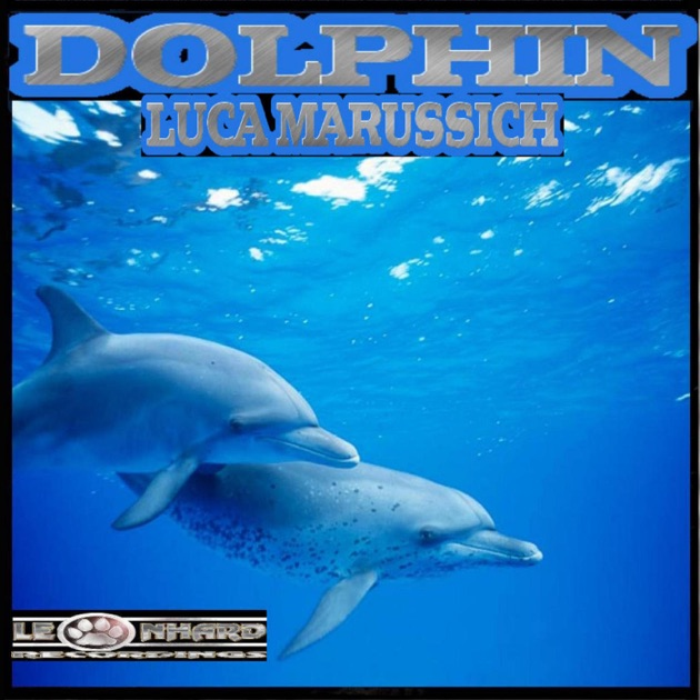 dolphin hispanic singles Its mainly hispanic residents and influx of south american visitors add latin rhythm and cuban cuisine to the mix  the smart dolphin from the tv show 电视节目中的 就.