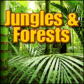 Jungle, Day - South America: Heavy Jungle Ambience, Various Birds, Insects Forests, Jungles & Swamps