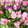 天使のオルゴール AKB48 BEST SONGS 1 ジャケット写真