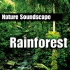 Rainforest Nature Sounds Only