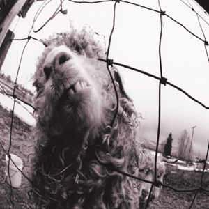Pearl Jam - Vs. (Expanded Edition)