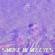 BermudaCal - Smoke in My Eyes