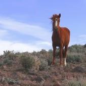 Thumpasaurus - High Horse (Kacey Musgraves Remix)