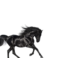 Album Old Town Road - Lil Nas X