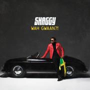 Wah Gwaan?! - Shaggy - Shaggy
