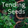 Tending Seeds: Adventures in Homesteading and Herbalism