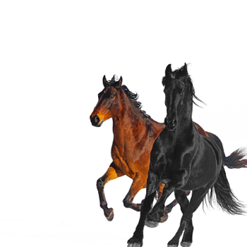 Lil Nas X Old Town Road (feat. Billy Ray Cyrus) [Remix] - Lil Nas X song lyrics