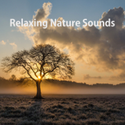 Birds Chirping - Nature Sounds & Baby Sleep - Nature Sounds & Baby Sleep