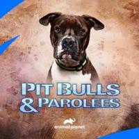Télécharger Pit Bulls and Parolees, Season 16 Episode 9