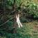 Swimming - Maple Glider