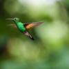 Tanaka Sato - Birds Sounds artwork