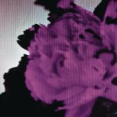Download All of Me (Tiësto's Birthday Treatment Remix) [Radio Edit] - John Legend Mp3 and Videos