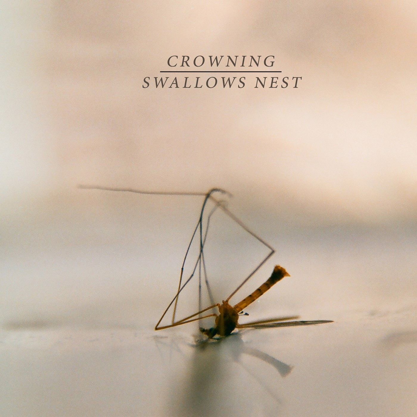 Crowning & Swallows Nest - Crowning / Swallows Nest  [Split] (2018)