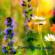 Lindsay Hayden - Flowers Bring Smiles - EP