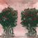 Fresh Roses - Juke Ross