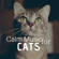 Kathy Kittin - Calm Music for Cats