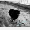 SISSOU by Yogee New Waves