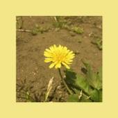 Oohyo - Dandelion (Single Ver.)
