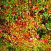 SW9 9SL - Single, Four Tet