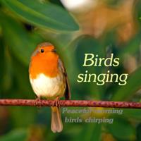 Auge Espiritual - Birds Singing Peaceful Morning Birds Chirping artwork