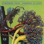 Tomorrows Tulips - Flaccid Guitar