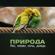 Птицы, красота дня - Звуки Природы Академия