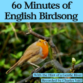 60 Minutes of English Birdsong (With the Hint of a Gentle River) - Nature Sounds