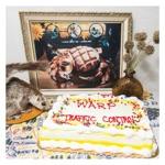 Warp - Sheet Cake