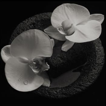 Corpse Flower Mike Patton & Jean-Claude Vannier album songs, reviews, credits