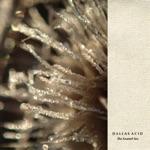 Dallas Acid - The Enamel Sea (Edit)