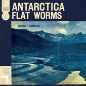 Flat Worms - Plaster Casts