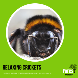 Various Artists - Relaxing Crickets - Tropical Nature Forest Water and Bird Sounds, Vol. 8