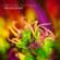 Groove da Praia - The Collective