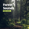 Relaxation Channel, Forest Sounds & Sleep Atmospheres - Jungle Birds artwork