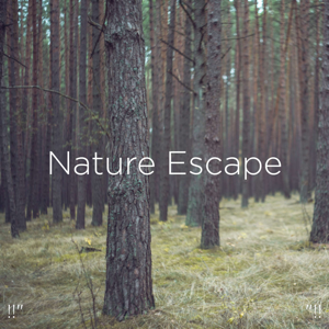 "Nature Sounds Nature Music & Nature Sounds - !!"" Nature Escape ""!!"