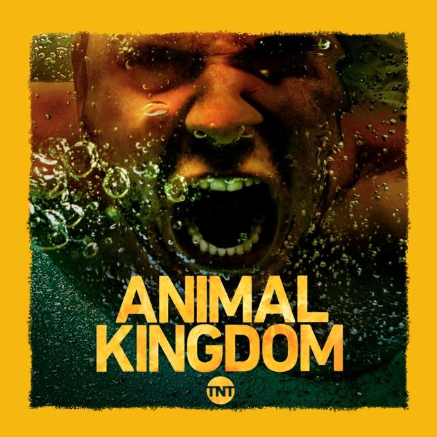 Homecoming - Animal Kingdom