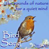 Bird Song (The Sounds of Nature for a Quiet Mind)