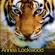 Annea Lockwood - Tiger Balm / Amazonia Dreaming / Immersion