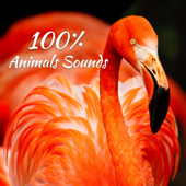 100% Animals Sounds: Awesome Wild Nature for Relaxation